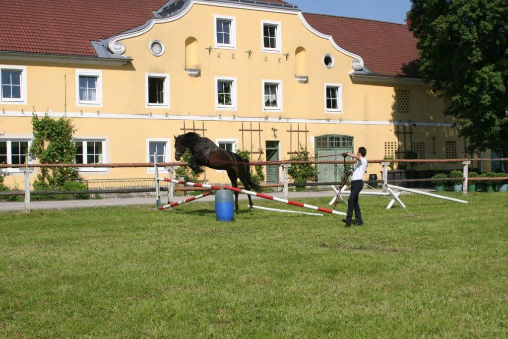 Alexander Kronsteiner Pferd longieren lernen über Hindernis