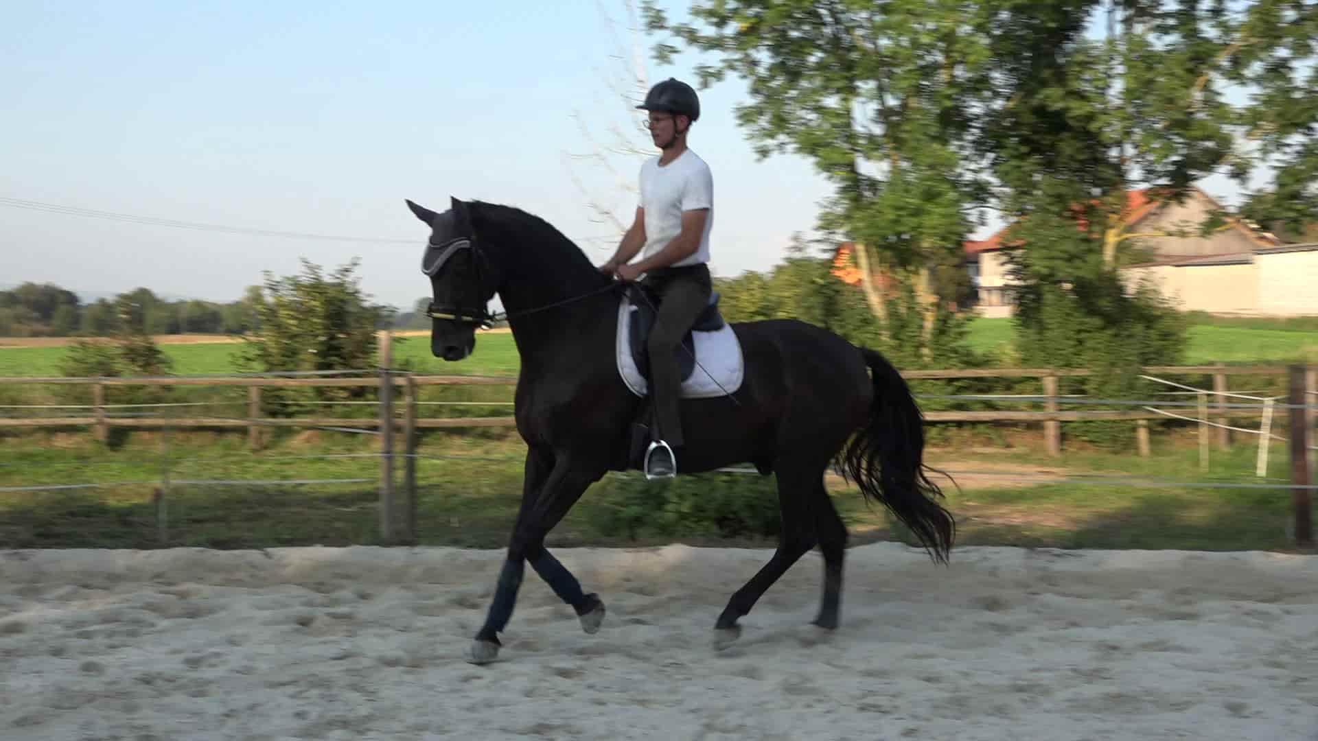 Beritt und Pferdetraining