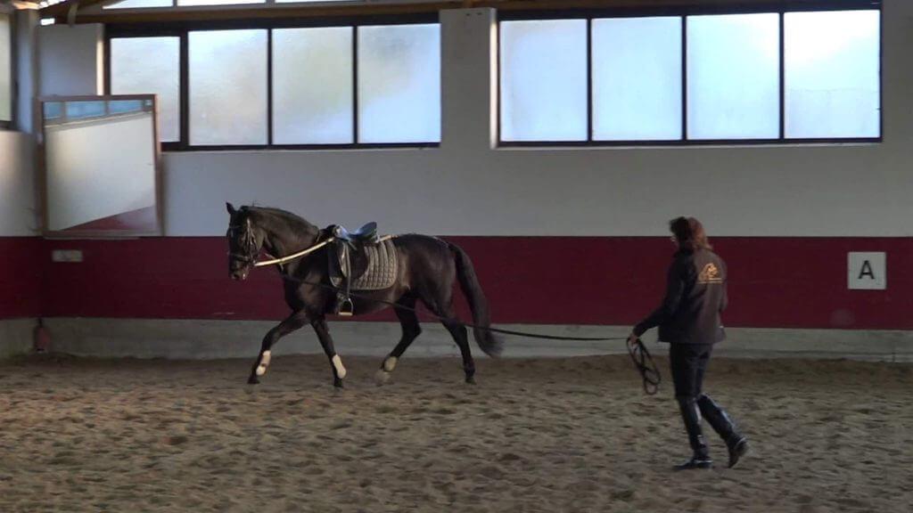 Irmi Kronsteiner Pferd longieren lernen mit Ausbinder