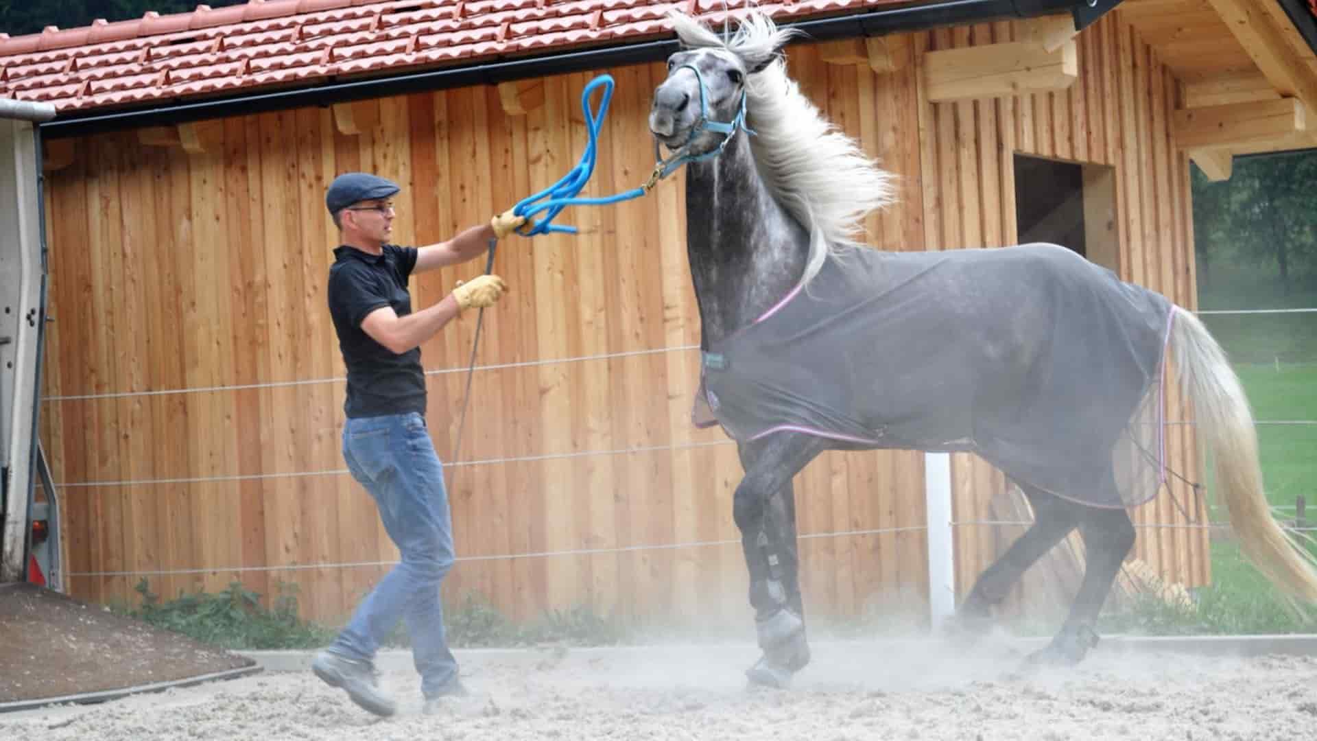 Betiehungstraining und Kommunikationstraining mit Pferden
